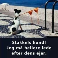 Stakkels hund