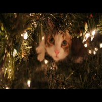 Cats attack christmas tree