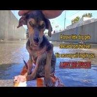 Mirakel da hund bliver reddet
